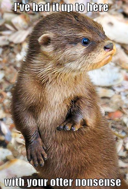 I've had it up to here with your otter nonsense meme