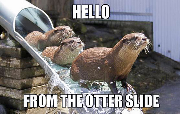 Hello From The Otter Slide Meme