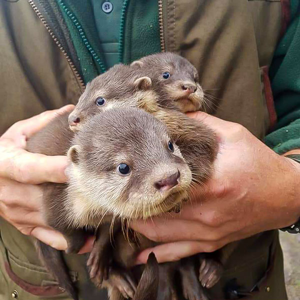 bouquet of otters