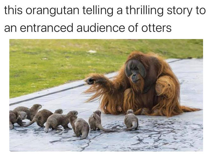 Otters And Orangutan
